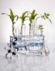 Plant growing in test tubes in a  laboratory