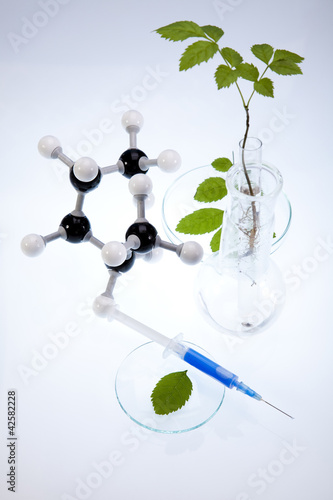 Laboratory glassware containing plants