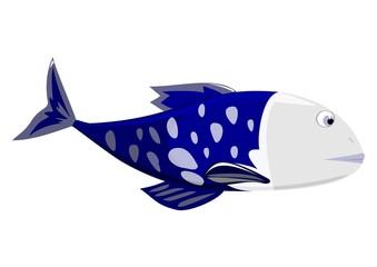 Dark blue fish - male on white background.