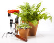 Gardening equipment on green plant