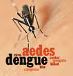 Aedes mosquito bite human skin and info text