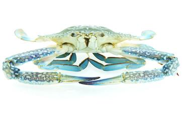 Fresh blue crab
