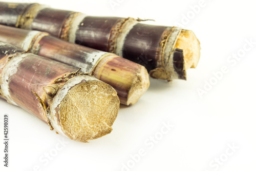 sugar cane with white background