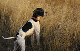 Dog alert in hunting field poster