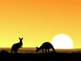 Kangaroo with sunset background