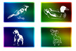 Rectangulo imagenes animales