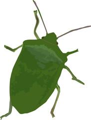 cimice insetto