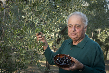 Italian olive farmer showing bowl of olives from his trees