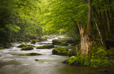 Great Smoky Mountains National Park Foggy Tremont River