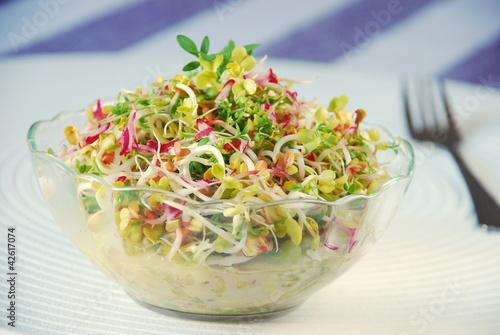 Zdrowa sałatka z kiełków i warzyw