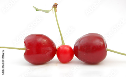 perfect tree cherries