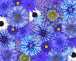 Blue Flower Background