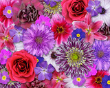 Red, Pink, Purple Flower Background