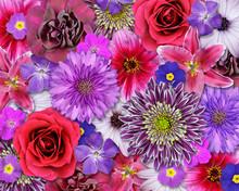 Czerwony, różowy, fioletowy kwiat tła