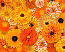 Pomarańczowy kwiat tła