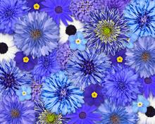 Niebieski Kwiat Tła