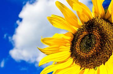 I Need Sun!