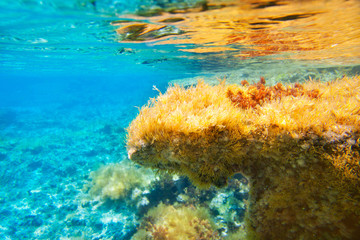 Ibiza Formentera underwater anemone seascape