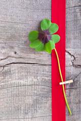 Glück ... ein Kleeblatt