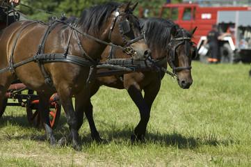 vintage horsedrawn