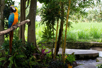 Tropical gardens and a parrot macaw