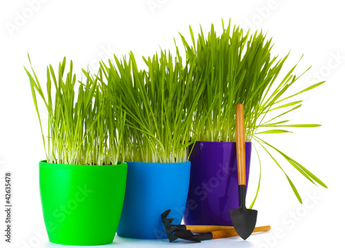 beautiful grass in a flowerpots and garden tools isolated