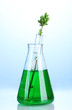 laboratory glassware with color liquid and genetically modified