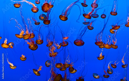 jelly fish in the blue ocean