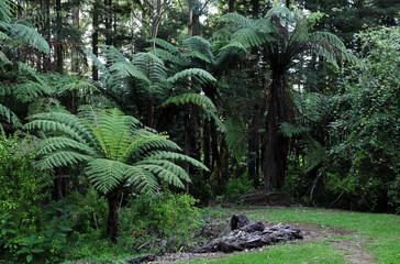 Native Bush, New Zealand