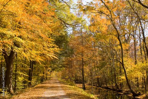 Autumn Path - 42645423