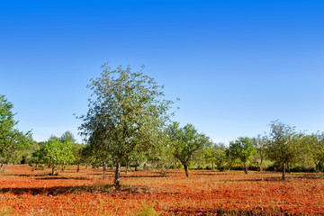 Agriculture in Ibiza island mixed mediterranean trees