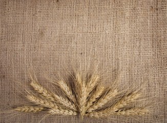 wheat on the  background