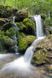 Fototapeta strumyk - drzewo - Dziki pejzaż