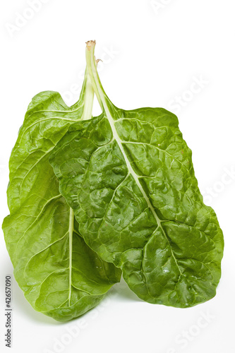 Garden fresh Swiss chard (silverbeet) leaves