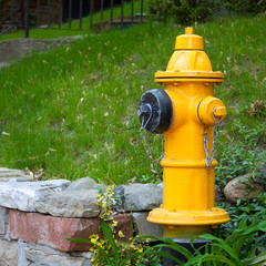 Yellow Fire Hydrant on garden wall in Toronto Neighborhood