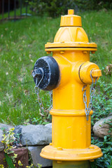 A Yellow Fire Hydrant, green lawn behind in Toronto Neighborhood