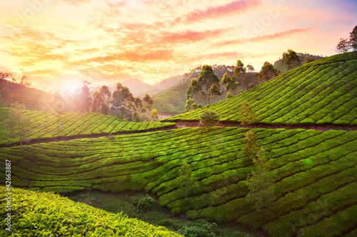 Staande foto Heuvel Tea plantation in Munnar