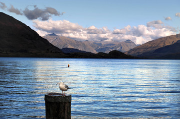 Sea View of South Island, New Zealand