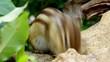 ひまわりの種を食べるシマリス