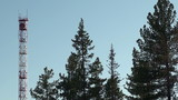 telecommunications tower & pines