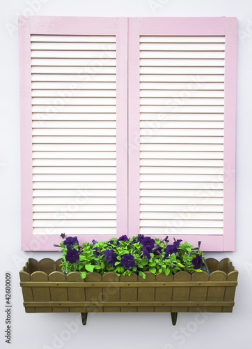 white shutters and flowers