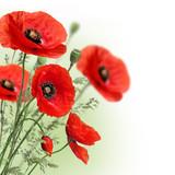Poppies flowers border - Fine Art prints