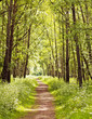 Leinwanddruck Bild - Path in a sunny summer forest