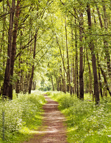 Leinwanddruck Bild Path in a sunny summer forest