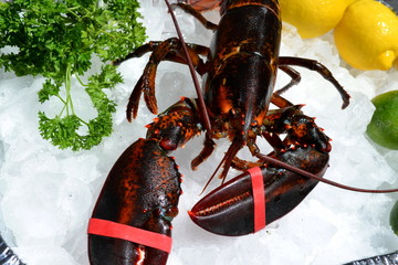 Picnic Lobster on Ice
