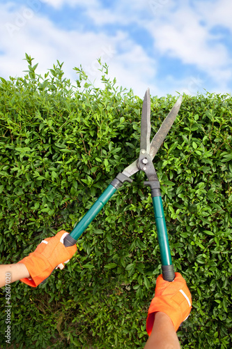 Hands with garden shears