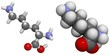 Lysine (Lys, K) molecule