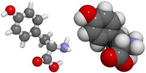 Tyrosine (Tyr, Y) molecule.