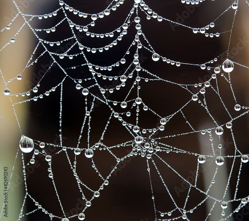 dew and spider web