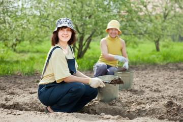 gardeners fertilizes  soil in garden